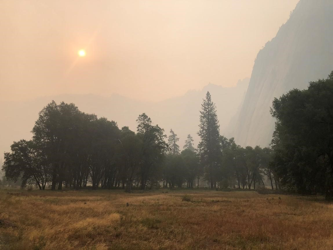 Forest - Yosemite