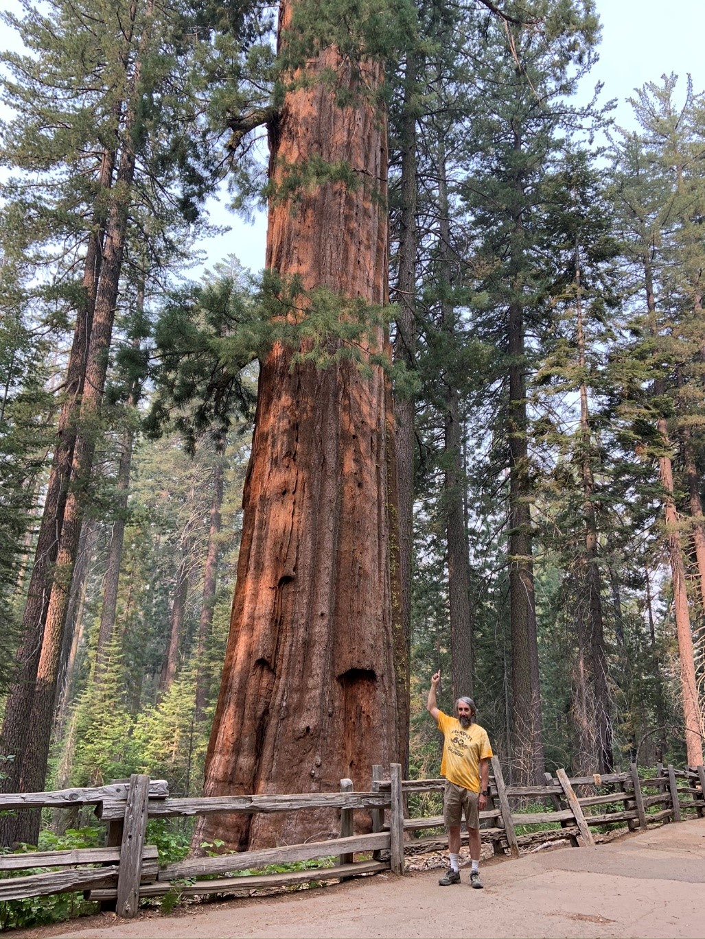 Yosemite - Sequoia trees